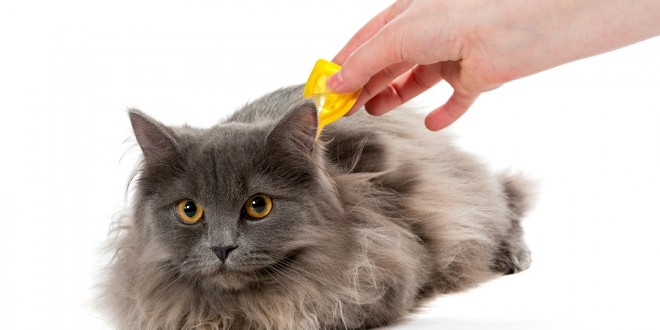 Effective Ways To Control Ticks And Fleas In Pets Mega Bored